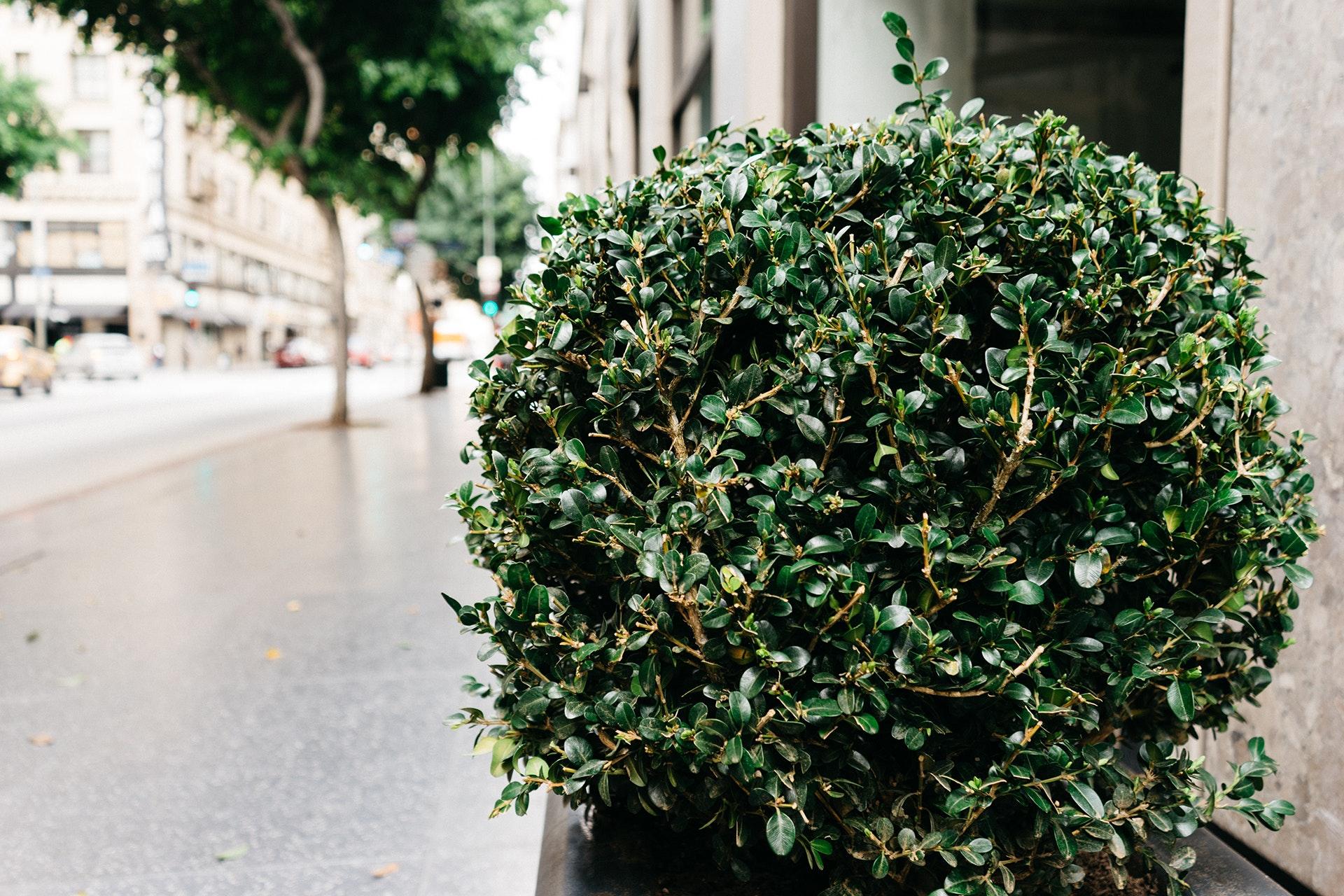 What Living Under a Bush Can Teach You