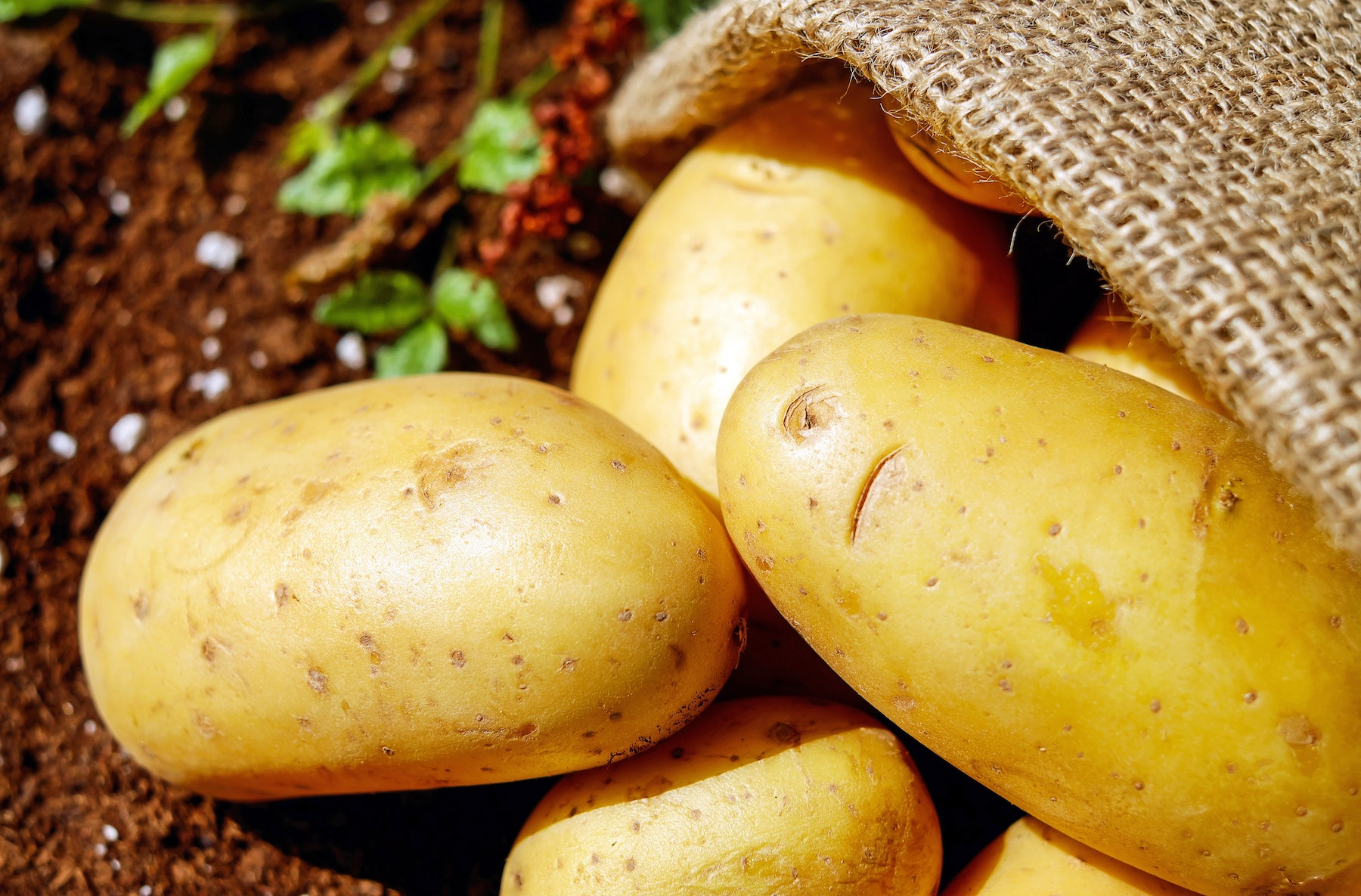 What Baked Potatoes Taught Me about Renewing My Mind