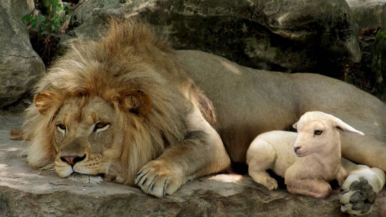 Lamb, Lion, and Shepherd